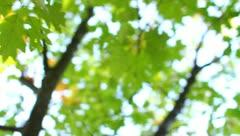 The beautiful varicoloured autumn forest Stock Footage
