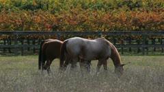 Horses Fall Foliage Stock Footage