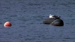 Seagull resting on the buoys Stock Footage