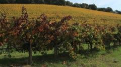 Irrigating Vineyard Grapevines - stock footage