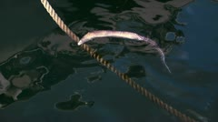 Dead fish in the sea attached to the rope of a ship Stock Footage