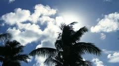 Stock Video Footage of Sun Palm tree