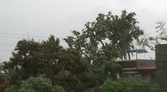 Stock Video Footage of Trees Sway As Strong Hurricane Winds Hit