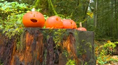 Halloween pumpkin in the forest, rather odd but cool Stock Footage