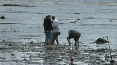People Searching For Clams 2 Stock Footage