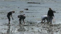 People Searching For Clams Stock Footage