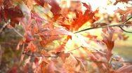 Fall Leaves Light Track Stock Footage