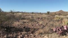 Purple Cacti - stock footage