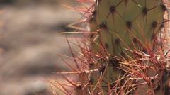 Cacti Rack Focus - stock footage