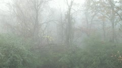 Foggy Woods Stock Footage