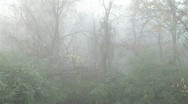 Stock Video Footage of Foggy Woods