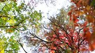 Stock Video Footage of The beautiful varicoloured autumn forest