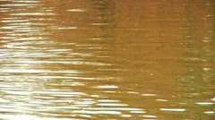 Duck on the Constitution Gardens Pond (LP-Washington-081a) Stock Footage