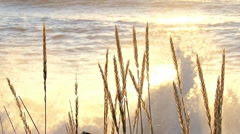 Sunset Glow Splashing Spray Grasses Illuminated Stock Footage