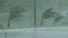 Palm Trees Thrash In Hurricane Winds Stock Footage