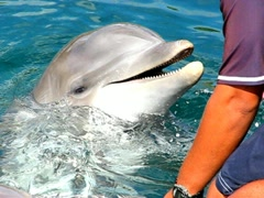 Dolphin training lesson 2 Stock Footage