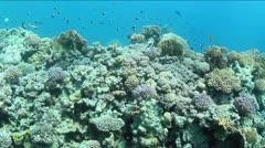Underwater reef edge - stock footage