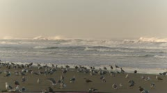 Oregon seashore, surf and birds, birds coming in for a landing Stock Footage