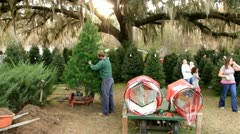 Shaking needles out of a Christmas tree Stock Footage