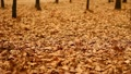 The strong wind and flying leaves in the autumn forest Footage
