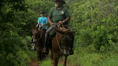 People ride horses along a narrow trail in Hawaii. Stock Footage