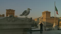National Monument to Victor Emmanuel II, seagull and photographer, Rome Stock Footage