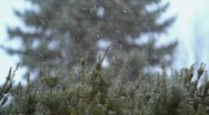 Stock Video Footage of Snowfall in front of Evergreen