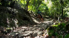 People ride horses through dense jungle in Hawaii. Stock Footage