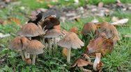 Mushrooms Stock Footage