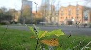 Oak sapling growing in city Stock Footage