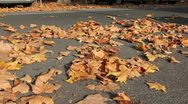 Stock Video Footage of Foliage on the street