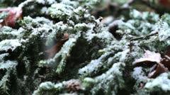 Snow Falls on Green Bush Stock Footage