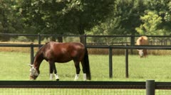 Horses Grazing in a Field - stock footage