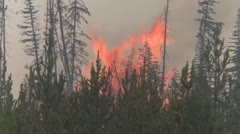 Forest fire, burning slash, flames behind trees Stock Footage