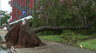 Stock Video Footage of Fallen Tree In Aftermath Of Tropical Storm