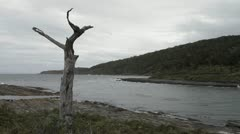 Tree in Patagonia Stock Footage