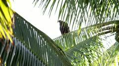 Bird between Palm trees Stock Footage
