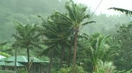 Stock Video Footage of Palm Trees Blow in Strong Wind of Tropical Storm