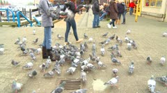 Pigeons feeding en masse at the feet of people Stock Footage