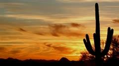 Saguaro Sunset Silhouette Time Lapse Stock Footage