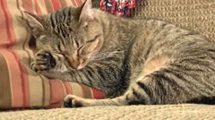 Sleeping cat close up 01 Stock Footage