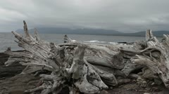 Strait of Magellan logs Stock Footage