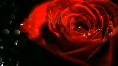 Water drop falling on red rose, Slow Motion Stock Footage