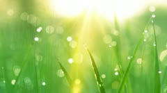 Dew drops in the sun on green grass. shot with slider. Stock Footage
