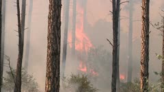 Fire in the Ponderosa Stock Footage