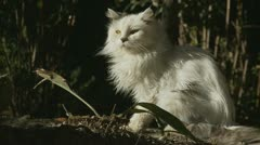 Profile of white cat Stock Footage