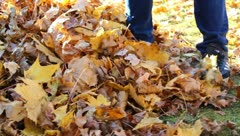 Boy Raking Leaves Work in Autumn Stock Video Stock Footage