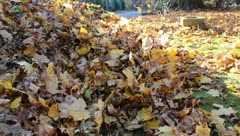Leaves Being Raked by Boy Work in Autumn Stock Video Stock Footage