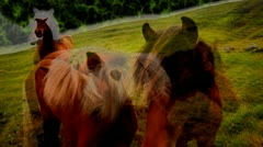 Funky sky horse Stock Footage