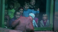 Kids watch on female orangutan with baby sit in front of fencing glass in ZOO Stock Footage